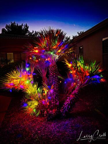 Arizona_Christmas larry