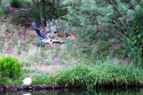 Bird landing(2) barb c