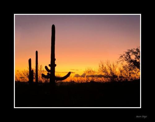 Dinga - AZ Sunset Classic-1