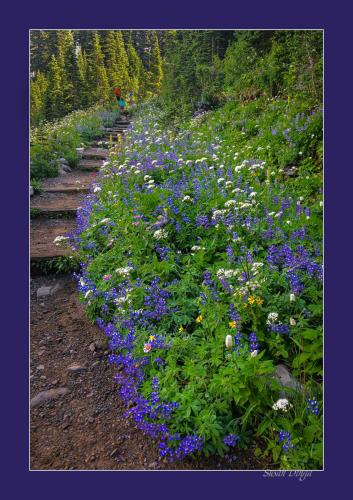 Dinga - Mt Rainier Garden Stairway - sm-2