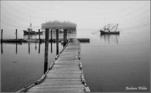 Maine in Fog