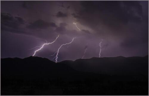 Monsoon Lightning barb