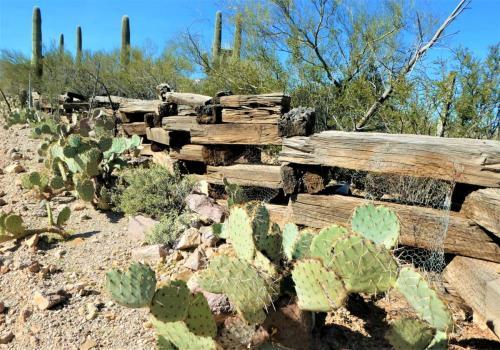 Rustic Fence near Desert Museum beverly