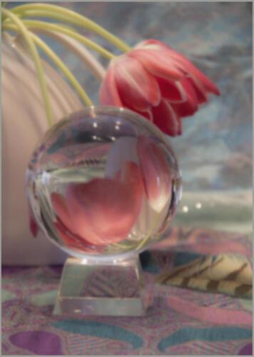 Tulip Blur-Wilder