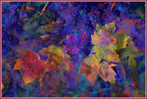 Wilder-Leaves Overlay