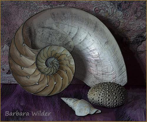 Wilder-Nautilus shell