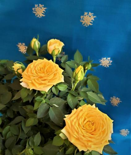Yellow Roses bev