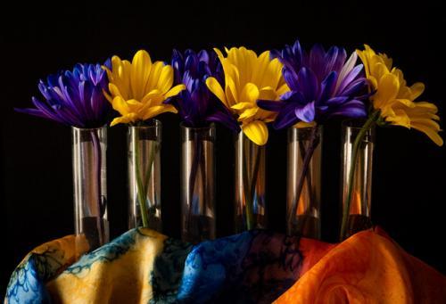color flower scarf jan