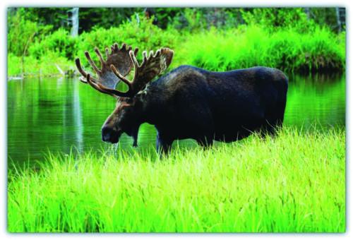 moose green1 bernie
