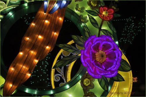 Asian Lantern Wilder Flowers