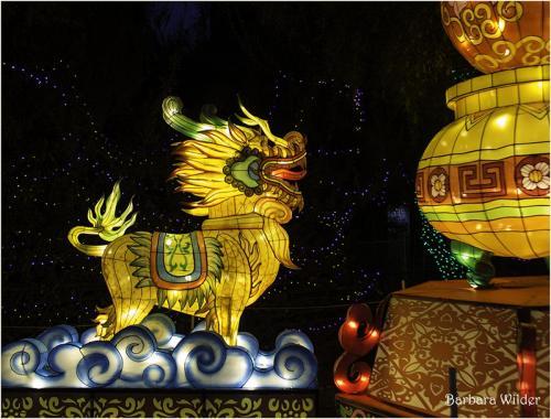 Asian Lantern Wilder Lion