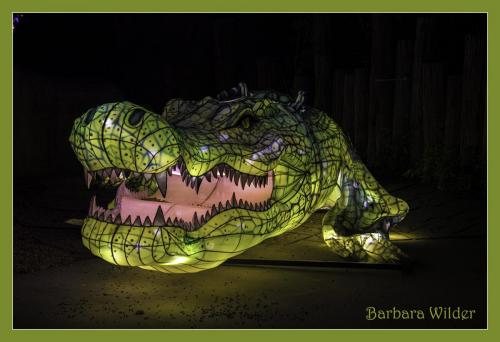Asian Lanterns Wilder Crocodile