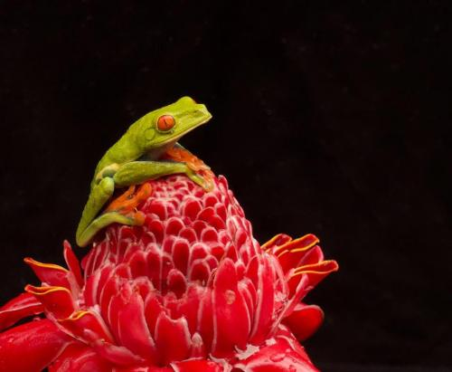 J. Cregan Frog