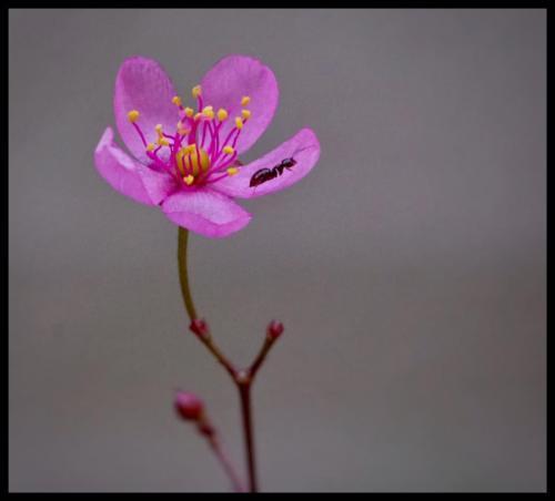 Jan's flower