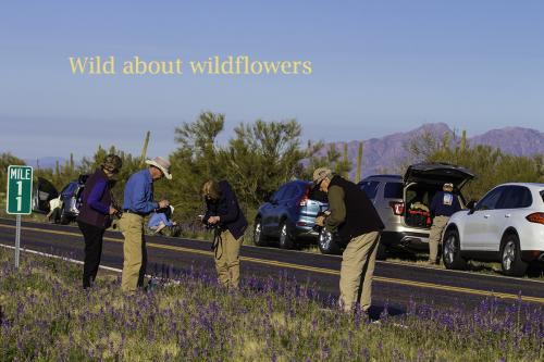 Picacho Wilder  Wildflowers on Roadside