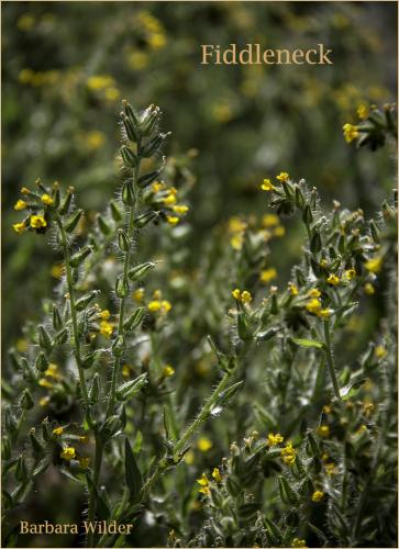 Picacho Wilder  Fiddleneck