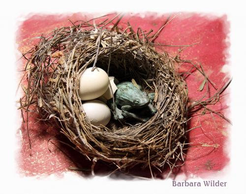 Wilder 6 Frog in Nest