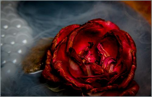 Wilder 9 Dried Rose