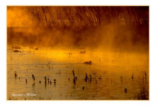 Wilder Morning Mist