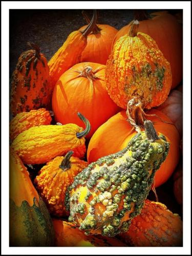 still life gourdsbernie
